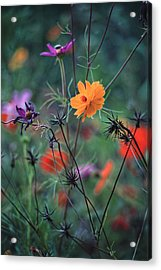 Tangles - A Dance Of Flowers And Weeds Acrylic Print by Michael Flood