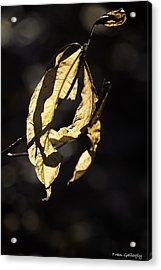 Tattered Leaf Acrylic Print by Fran Gallogly