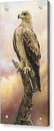 Tawny Eagle Acrylic Print by Lucie Bilodeau
