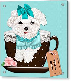 Teacup Baby Maltese Acrylic Print by Margaret Newcomb