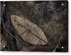 Teak And Mango Acrylic Print by David Longstreath