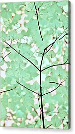 Teal Greens Leaves Melody Acrylic Print by Jennie Marie Schell