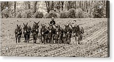 Team Of Eight Acrylic Print by Guy Whiteley