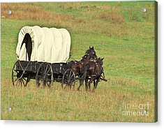 Team Of Horses Pulling A Covered Wagon Acrylic Print by Ron Sanford