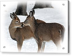 Tender Sentiment Acrylic Print by Christina Rollo