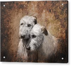 Tenderness Acrylic Print by Mary OMalley