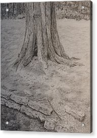 Tennessee Tree And Rock Wall Acrylic Print by Arthur Witulski