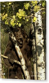 Territorial Markings Acrylic Print by Wildlife Fine Art