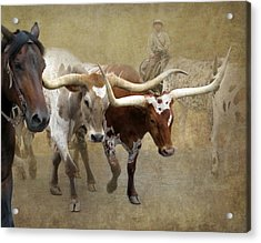 Texas Longhorns Acrylic Print by Angie Vogel
