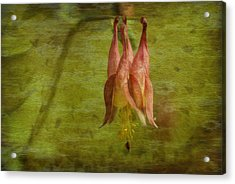 Textures Of Nature 2 Acrylic Print by Jack Zulli
