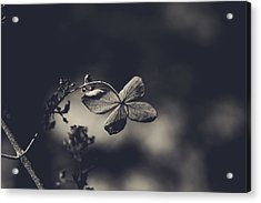 That Special Warmth Acrylic Print by Laurie Search