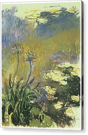 The Agapanthus Acrylic Print by Claude Monet