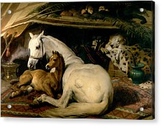 The Arab Tent Acrylic Print by Sir Edwin Landseer