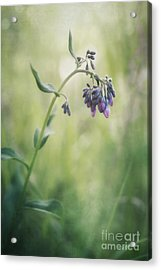 The Arrival Of Spring Acrylic Print by Priska Wettstein