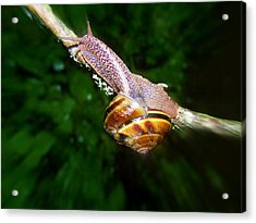 The Art Of Mollusk Calesthenics Acrylic Print by Heather L Wright