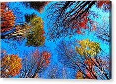 The Autumn Leaves At Potato Creek Acrylic Print by Tina M Wenger