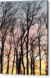 The Beauty Of Nature Acrylic Print by Adela Kitty