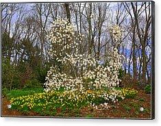 The Beauty Of Spring Acrylic Print by Dora Sofia Caputo Photographic Art and Design