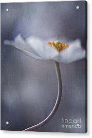 The Beauty Within Acrylic Print by Priska Wettstein