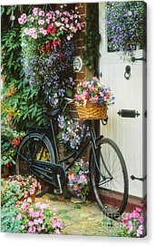 The Bicycle At Lavender Cottage Acrylic Print by MGL Meiklejohn Graphics Licensing