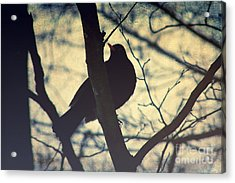 The Bird Acrylic Print by Angela Doelling AD DESIGN Photo and PhotoArt