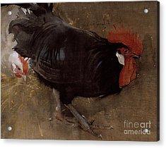 The Black Cock Acrylic Print by Joseph Crawhall