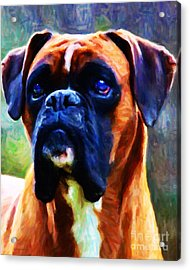 The Boxer - Painterly Acrylic Print by Wingsdomain Art and Photography