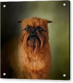 The Brussels Griffon Acrylic Print by Jai Johnson