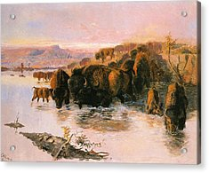 The Buffalo Herd Acrylic Print by Charles Russell