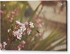 The Busy Bee Acrylic Print by Angela A Stanton