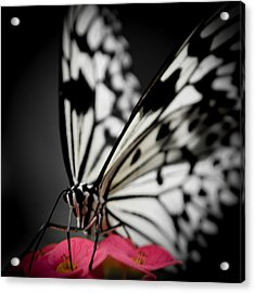 The Butterfly Emerges Acrylic Print by Jen Baptist