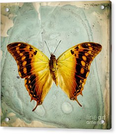 The Butterfly Project 6 Acrylic Print by Diane Miller