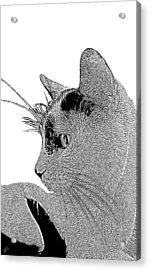 The Cat Acrylic Print by Ben and Raisa Gertsberg