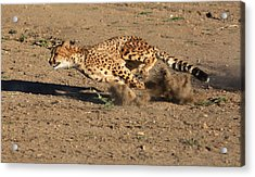 The Chase Acrylic Print by Donna Kennedy