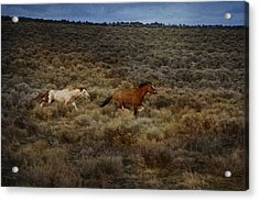 The Chase Is On D1215 Acrylic Print by Wes and Dotty Weber