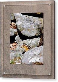 The Chipmunk Acrylic Print by Patricia Keller