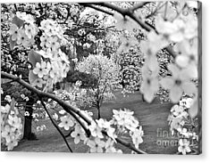 The Color Of Spring Acrylic Print by Jay Nodianos