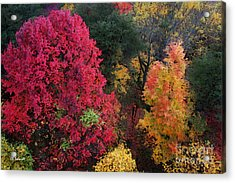 The Colors Of Fall Acrylic Print by E B Schmidt
