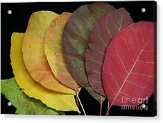 The Colours Of Nature Acrylic Print by Stela Taneva