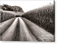 The Corn Road Acrylic Print by Olivier Le Queinec