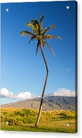 The Crooked Palm Tree Acrylic Print by Pierre Leclerc Photography