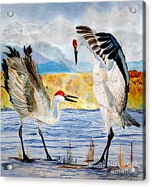 The Dance - Sandhill Cranes Acrylic Print by Anderson R Moore