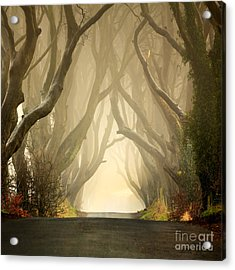 The Dark Hedges 2011 Acrylic Print by Pawel Klarecki