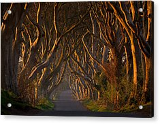 The Dark Hedges In The Morning Sunshine Acrylic Print by Piotr Galus