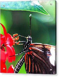 The Doris Acrylic Print by Optical Playground By MP Ray