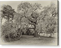 The Dueling Oak - A Place For Dying Bw Acrylic Print by Steve Harrington