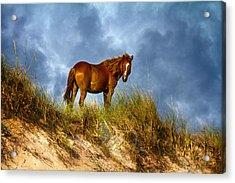 The Dune King Acrylic Print by Betsy Knapp