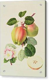 The Dutch Codlin Acrylic Print by William Hooker