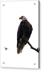 The Eagle And The Hummingbird Acrylic Print by Tranquil Light  Photography