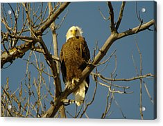 The Eagle Looks Down Acrylic Print by Jeff Swan